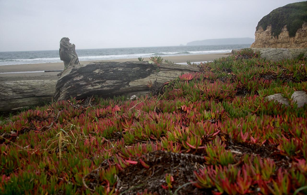 Drake Beach, Marin County