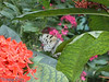 Can you see the butterfly?