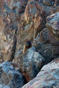 Buttes hike 2012 Wild plum 045