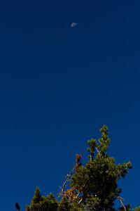 Buttes hike 2012 Wild plum 008