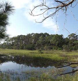 Exploring St. Augustine's Fish Island