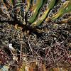 upclose cactus scar