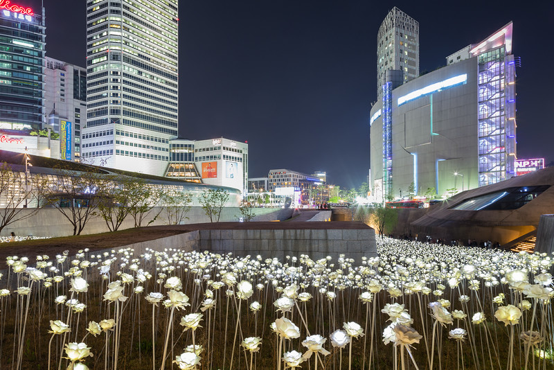 Sea of LED flowers