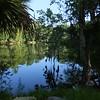 wetlands, Bike Trail, Dunnellon FL, Bike Bridge, 2017