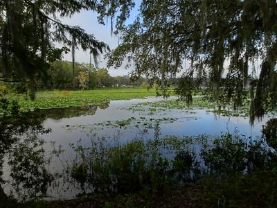 Lake Henderson Nature