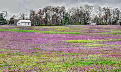 Spring Field in Goshen