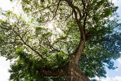 Rain Tree, Kanchanaburi
