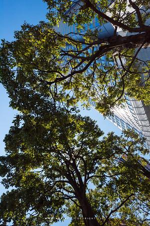 Roppongi & Tokyo Midtown