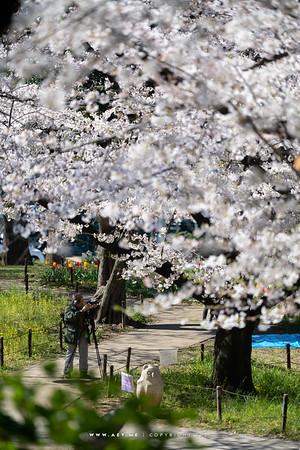 Shiba Park