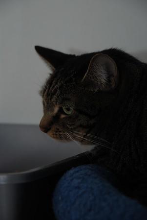 Flavia contemplating