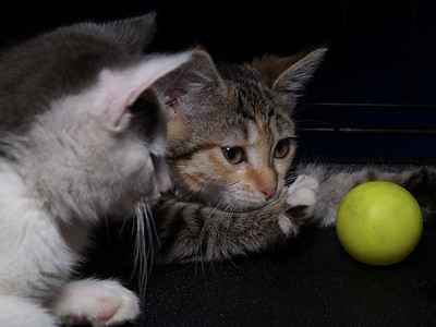 Ace CC and Evita ponder the meaning of The Yellow Ball.