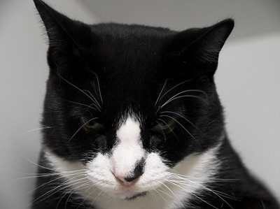 Sylvester looking coy.