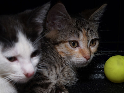 Having mastered the mysteries of The Yellow Ball, Ace CC and Evita move on to pondering The Wisdom of the Litter Box.