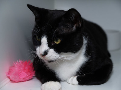 Sylvester. I put the pink toy there for contrast.