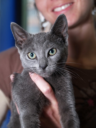 Luis, a playful kitten who was at Petco all of 30 minutes before a couple of Marcy's friends swooped in and adopted him.