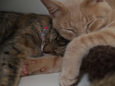 Tigger and Chanel raising the cute factor.