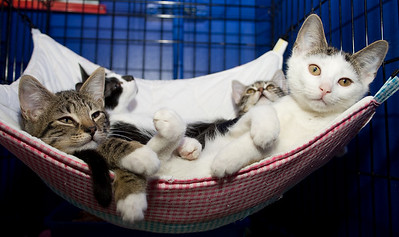 Hammock, maximum occupancy 4. The Chinatown kittens, just hangin' out.