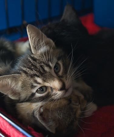 Tino at the top of a three-kitten pileup