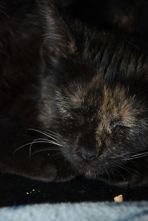 Cordelia obeys Newton's second law: A kitten at rest remains at rest.