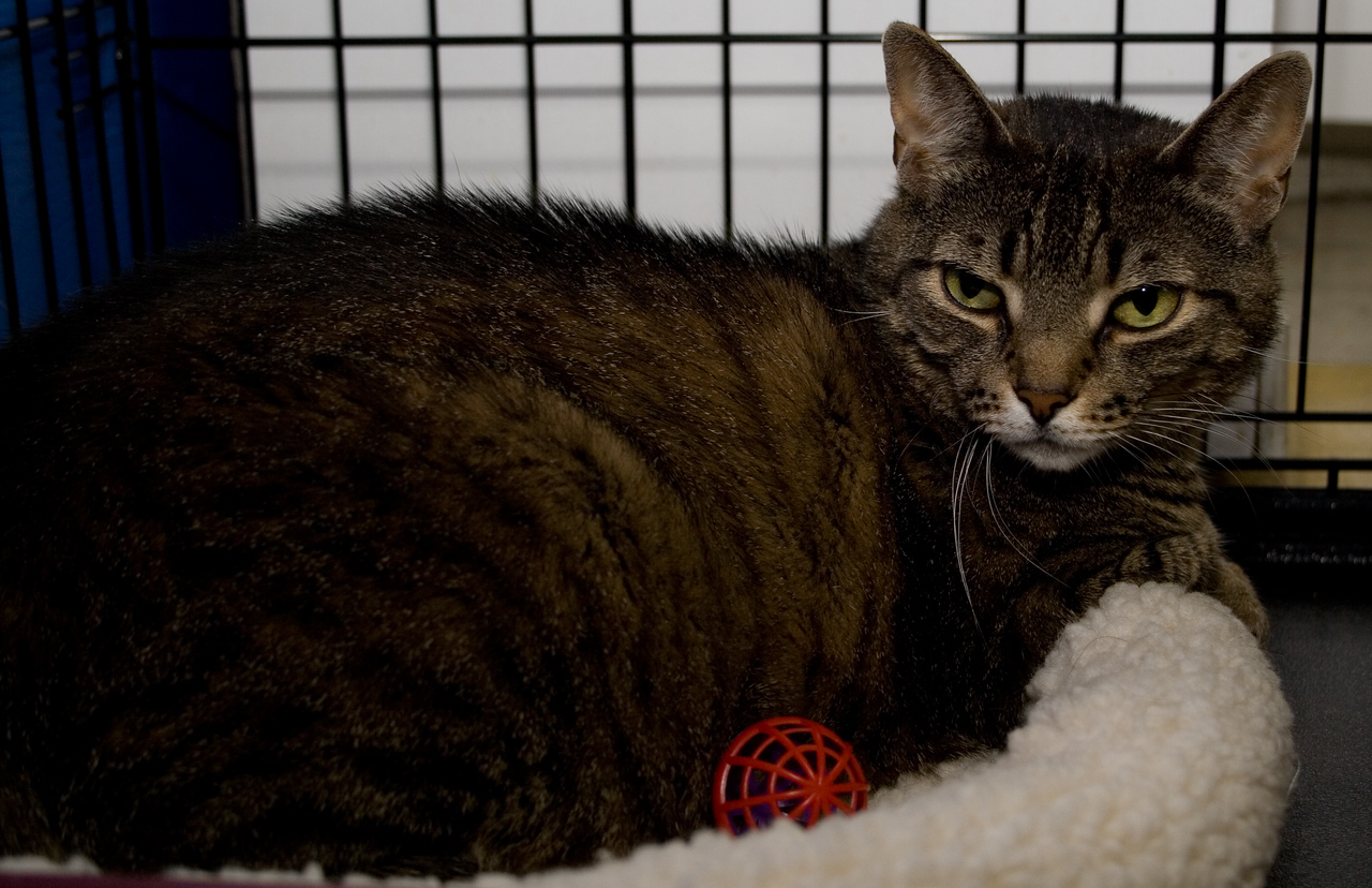 This poor 10-year-old gal, Tigger, was abandoned with the groomers at Petco.