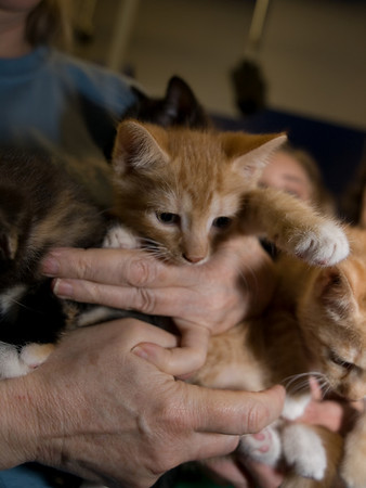 Kittens by the armful