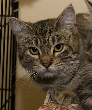 Unknown cat at Emerita's