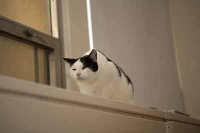The Hunch Cat of Notre Dame