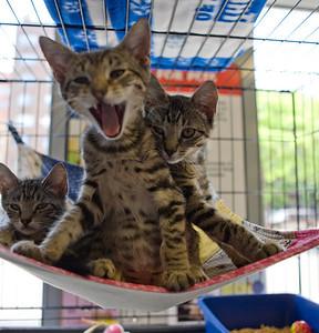 The Smith kittens, Noah, Kelly and Patti