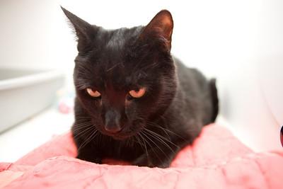 Wonder, looking devilishly handsome