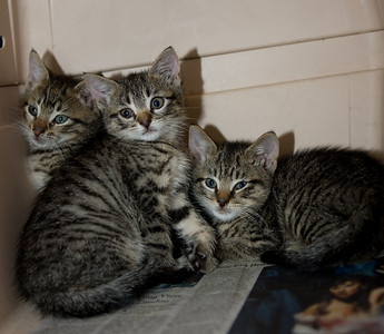 More Smith kittens: this time, it's Bobbin, Betty and Barnacle Bill Smith