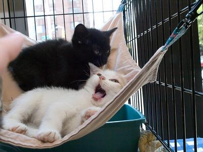 Darien gets yawn of the week