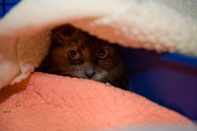 Mocha in hiding