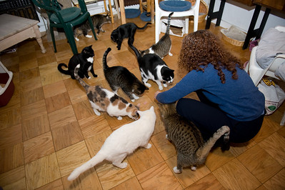 Cats gather for the ritual meat hurling