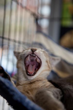 Maddie's humongous yawn.