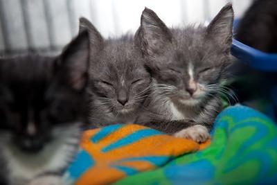 The Irish kittens