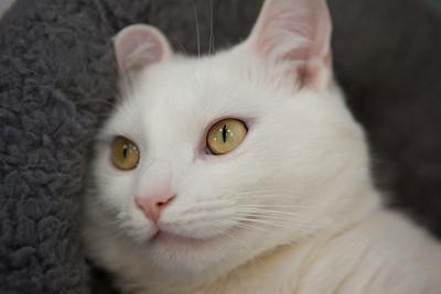 Spot, looking dreamy