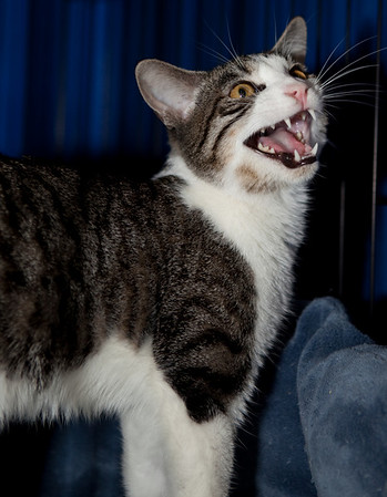 Longshot. He's yawning, not screaming.