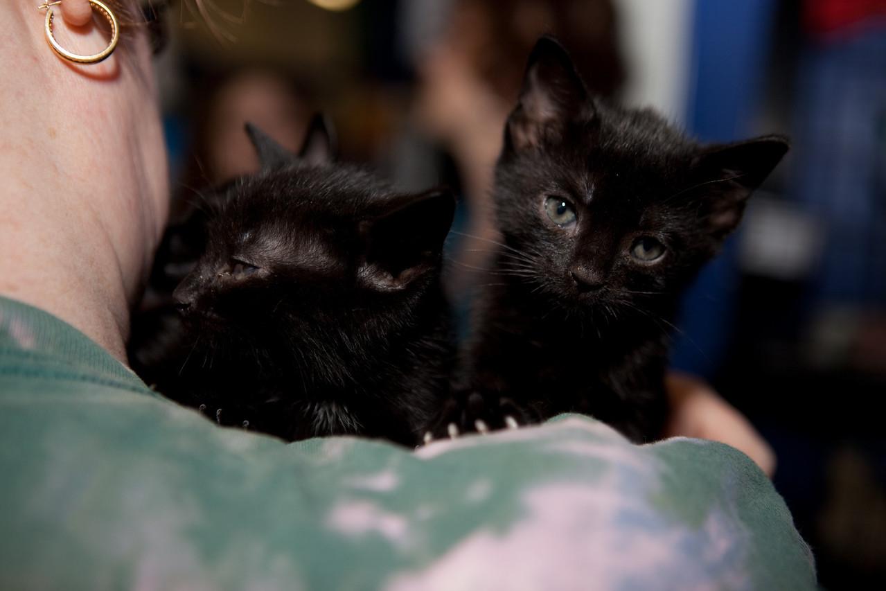 Lisa got herself an armful 'o kittehs.