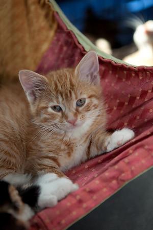 An Italian kitten. Camille