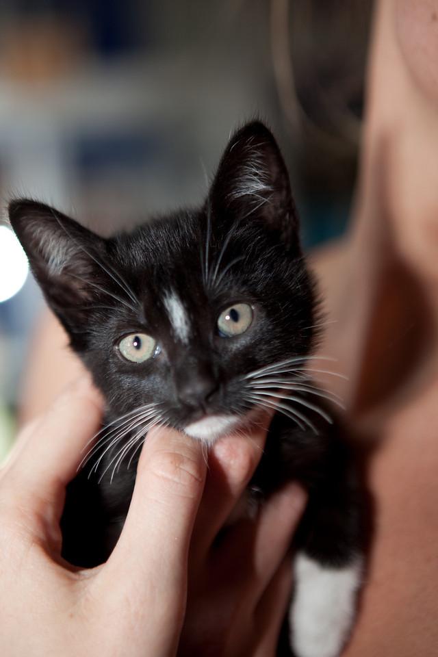 Marie, one of the Italian kittens.