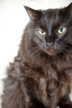Sweet Pea, looking dramatic. RIP September 2012.