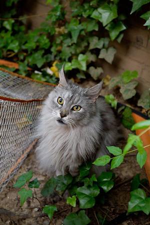 Ghost Kitty, aka Silver