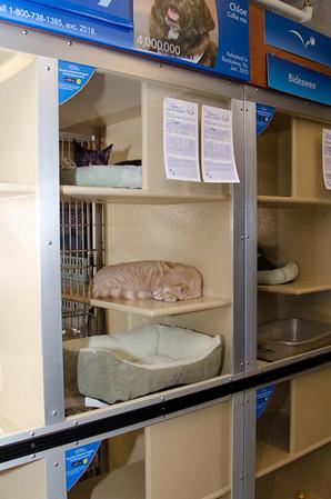 Petsmart adoption center