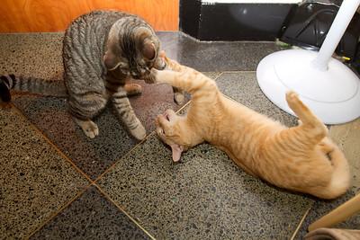 Cano and Ruffin wrestling