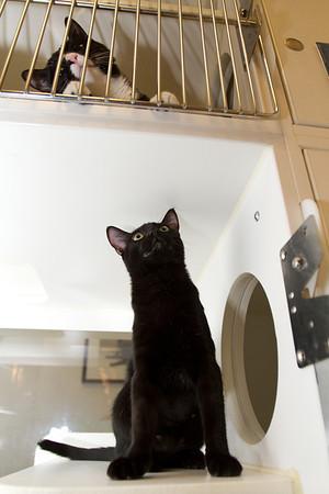 Monkey wants to meet her upstairs neighbor, Izzy