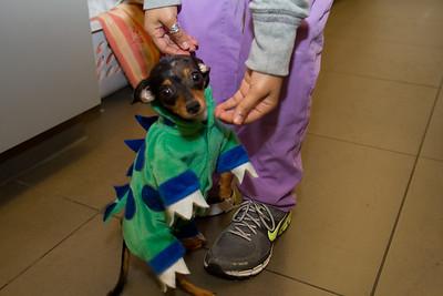 Jose's tiny, tiny dog