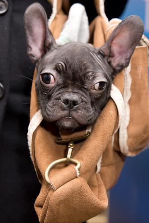 Miu Miu the bag dog