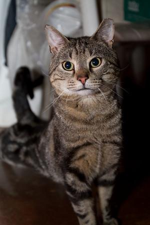 Stripey, aka Bruno