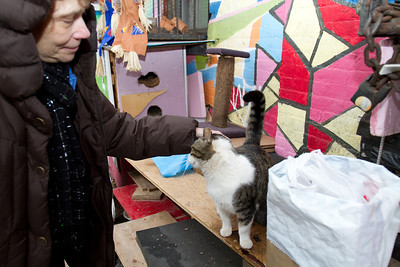 Holly pets the friendly Tabby from the River/Wythe Metropolitan Avenue colony