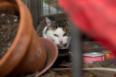 River/Wythe Metropolitan Avenue kitty